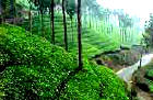 Hill Station - Munnar Kerala India